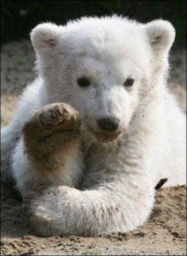 Фотография Po1ar-Bear